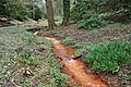 Rombergpark-100330-11286-Bachlauf.jpg