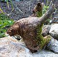 Root animal head1.JPG