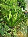 Rostliny ve skleníku v Lednici (9).jpg