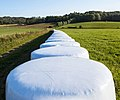 Row of white silage bales in Brastad.jpg