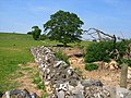Ruin near Wetton - geograph.org.uk - 198569.jpg