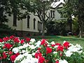 Rutgers University College Avenue campus flowers red and white.jpg