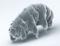 Image SEM de Milnesium tardigradum à l'état actif - journal.pone.0045682.g001-2.png