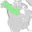 Salix arbusculoides range map 1.png