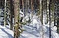 Salpa-line Finland - panoramio (6).jpg