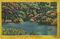 Sample of colored landscape locals, advertisement for NYCE post card co (NBY 422148).jpg