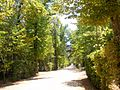 San Ildefonso - Reales Jardines 01.JPG