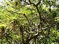 San Juan Botanical Garden - DSC07046.JPG