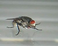 как чиститься от паразитов с семя льна