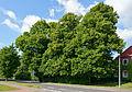 Schleswig-Holstein, Wilster, Naturdenkmal NIK 6516.JPG