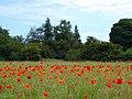Scrubland near Martlesham - geograph.org.uk - 1339923.jpg