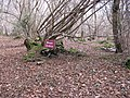 Sign in Barn's Copse adjacent to footpath - geograph.org.uk - 1142111.jpg