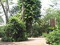 Singapore Zoo 17.JPG