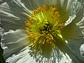 Single flower, Floriade 2004.JPG