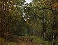 Sisley - Avenue-Of-Chestnut-Trees-1867.jpg
