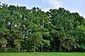 Skrwilno, park dworski 2 (WLZ14).jpg