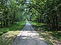 Sligo Creek Trail Kemp Mill 08.jpg