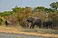 Sloni na silnici v národním parku Chobe, cestou do Namibie - Botswana - panoramio (1).jpg