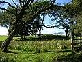 Small Wood Near Langlee - geograph.org.uk - 240682.jpg