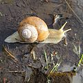 Snails in the Nature.jpg