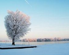 Sneeuw1.jpg