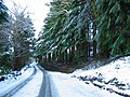 Snow covered trees by Auchnasavil - geograph.org.uk - 722421.jpg