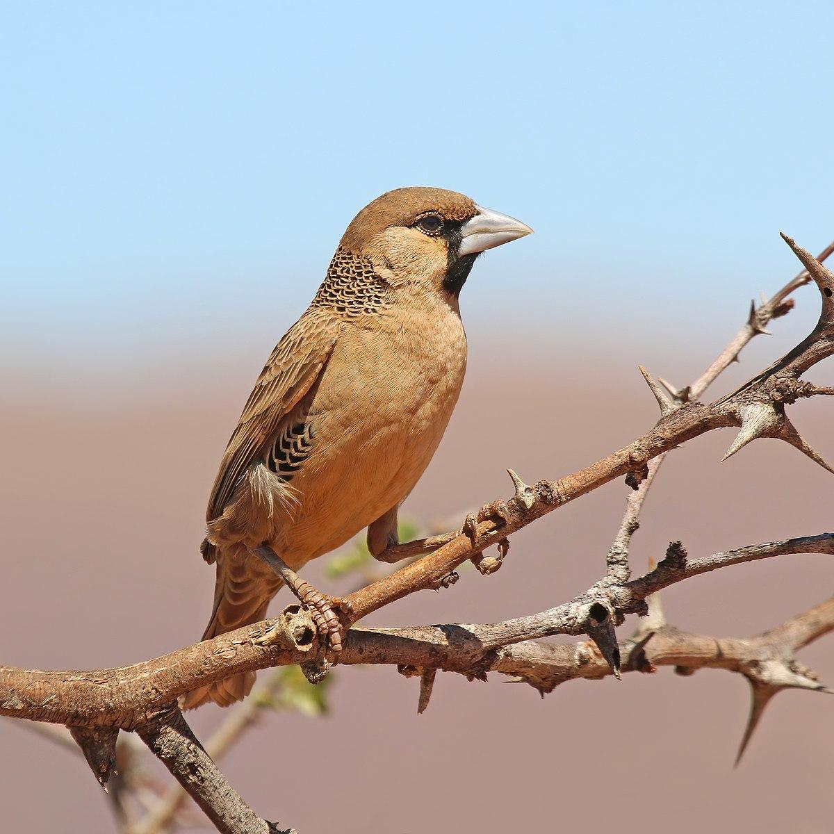 Birds Nest Food Ideas