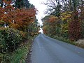 Some autumn colours by Lower Braidwood - geograph.org.uk - 627055.jpg