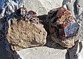 Sphalerite on Devonian dolostone (Auglaize Quarry, near Junction, Ohio, USA) (48882671812).jpg