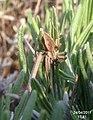 Spider (FG) (5663415569).jpg