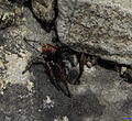 Spider 2 עכביש.JPG