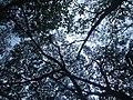 Spreading branches.jpg
