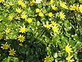 Spring flowers - geograph.org.uk - 517136.jpg