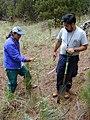 Starr-021126-0065-Rubus niveus-form b small plant with Kim and Mach-Polipoli-Maui (24445254792).jpg