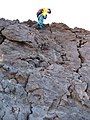 Starr-091207-1584-Pellaea ternifolia-habit with Forest on rock-Split Rock Haleakala National Park-Maui (24898419801).jpg