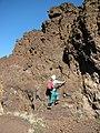 Starr-091207-1620-Asplenium adiantum nigrum-habit with Forest on rock-Ka Moa o Pele overflow Haleakala National Park-Maui (24624161359).jpg