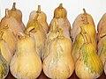 Starr-131002-2353-Cucurbita moschata-harvested fruit-Hawea Pl Olinda-Maui (24600437303).jpg