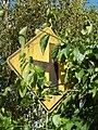 Starr-140222-0336-Banisteriopsis caapi-vine covering road sign-Haiku-Maui (24609857374).jpg