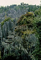 Stone forest 1983-18.jpg