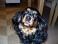 Stoopidy Dog (2202910357).jpg