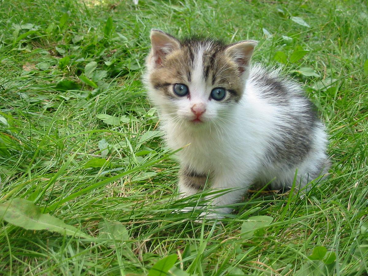 Kitty Wiktionary