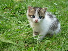 https://upload.wikimedia.org/wikipedia/commons/thumb/c/cd/Stray_kitten_Rambo002.jpg/220px-Stray_kitten_Rambo002.jpg