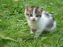 220px-Stray_kitten_Rambo002.jpg
