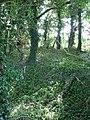 Strip woodland beside public footpath - geograph.org.uk - 1451490.jpg