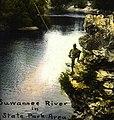 Suwannee River in state park area (3247306595).jpg