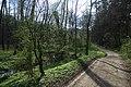 Svrkyně, údolí potoka.jpg