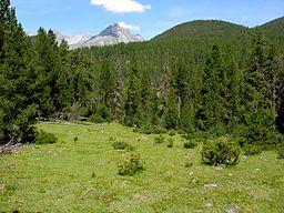 Swiss National Park 145