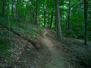 Sycamore trail Hoosier National Forest.jpg