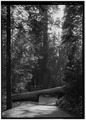 TUNNEL TREE, FACING WEST SOUTHWEST - Generals Highway, Three Rivers, Tulare County, CA HAER CAL,54-THRIV.V,2-125.tif