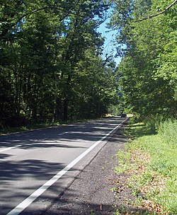 A paved roadway seen from its right with a solid yellow line on the left, dashed white line in the middle and solild white at right goes into an area at the center of the image where branches from the tall trees on either side hang over and shade it from the sunlight coming in from the left